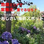 池袋の紫陽花の名所?駅から30分以内のあじさいスポット