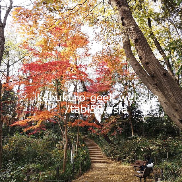 おとめ山公園(JR高田馬場駅)/池袋から30分以内!紅葉狩り