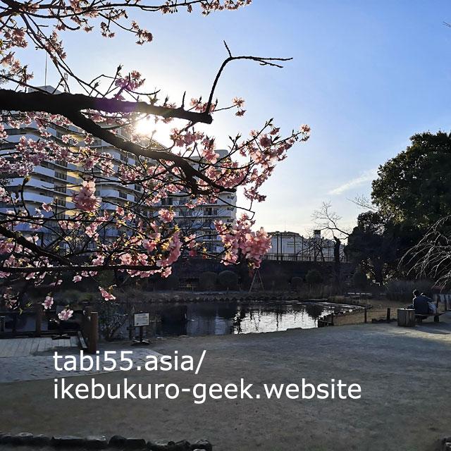 池のほとりにぽつんと咲く!哲学堂公園
