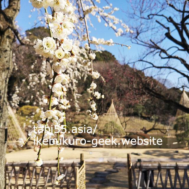 日本庭園!肥後細川庭園【都電:雑司が谷から4駅】