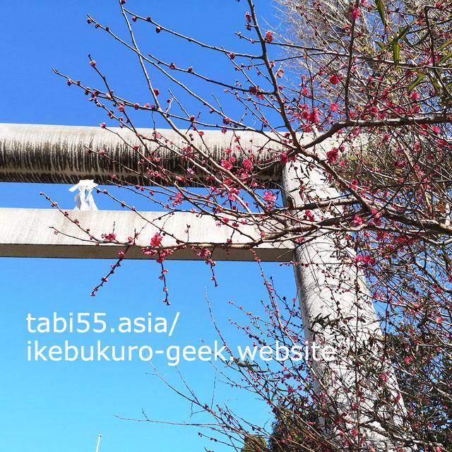 池袋御嶽神社!白い鳥居と一緒に紅梅の写真が撮れる