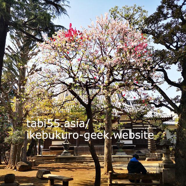 桃や紫陽花がかわいらしい!本立寺
