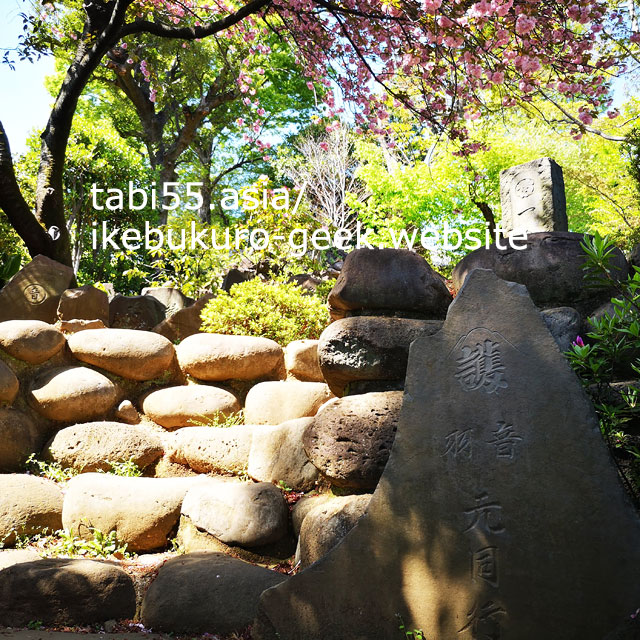 ピンクの絨毯が敷かれます!大本山護国寺