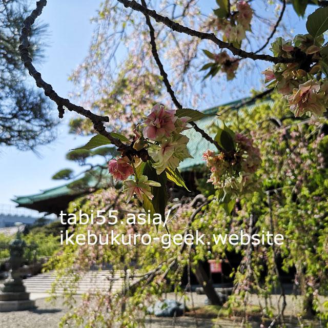大本山護国寺