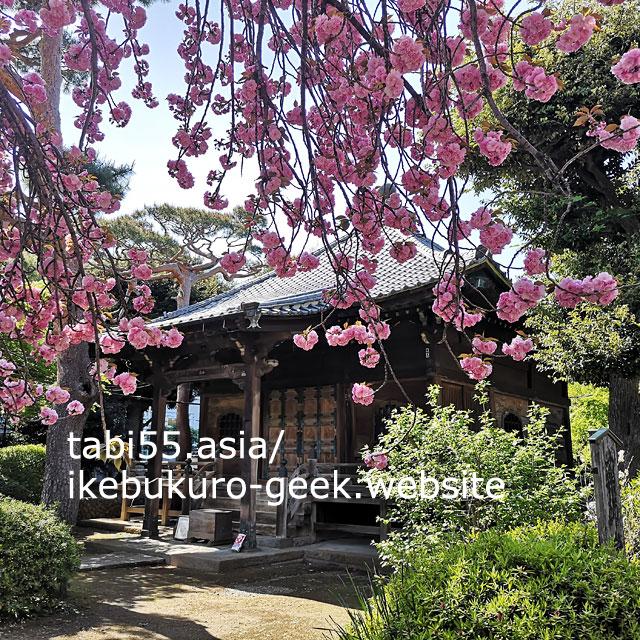 ピンクの絨毯も!大本山護国寺