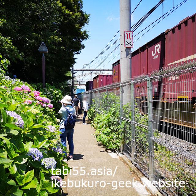 飛鳥山公園の「飛鳥小径」で、紫陽花と電車を一緒に撮影