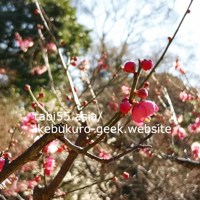 梅園も!築山泉水回遊式の日本庭園:小石川後楽園【池袋駅から3駅】
