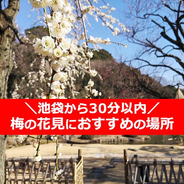 池袋から30分以内!梅の花×花見なら【6選】