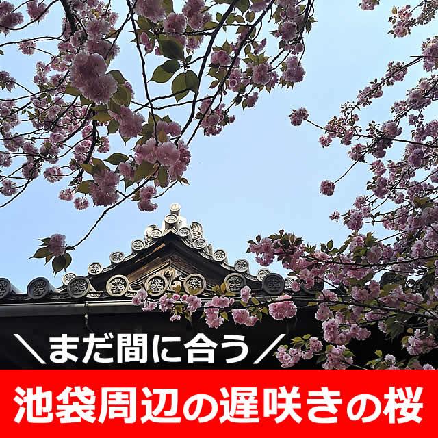 まだ間に合う!八重桜など遅咲きの桜×池袋エリア【5選】